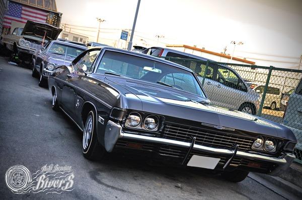 impala_001